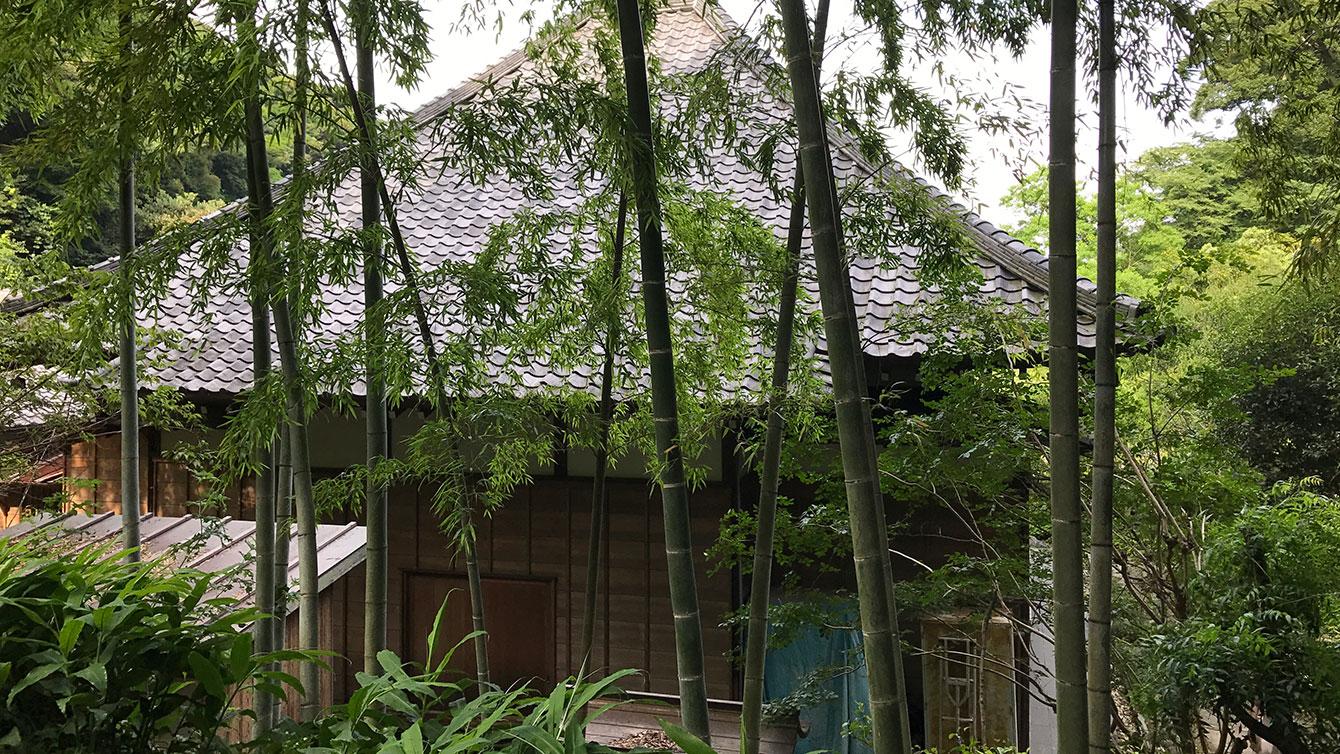 光則寺裏手の竹
