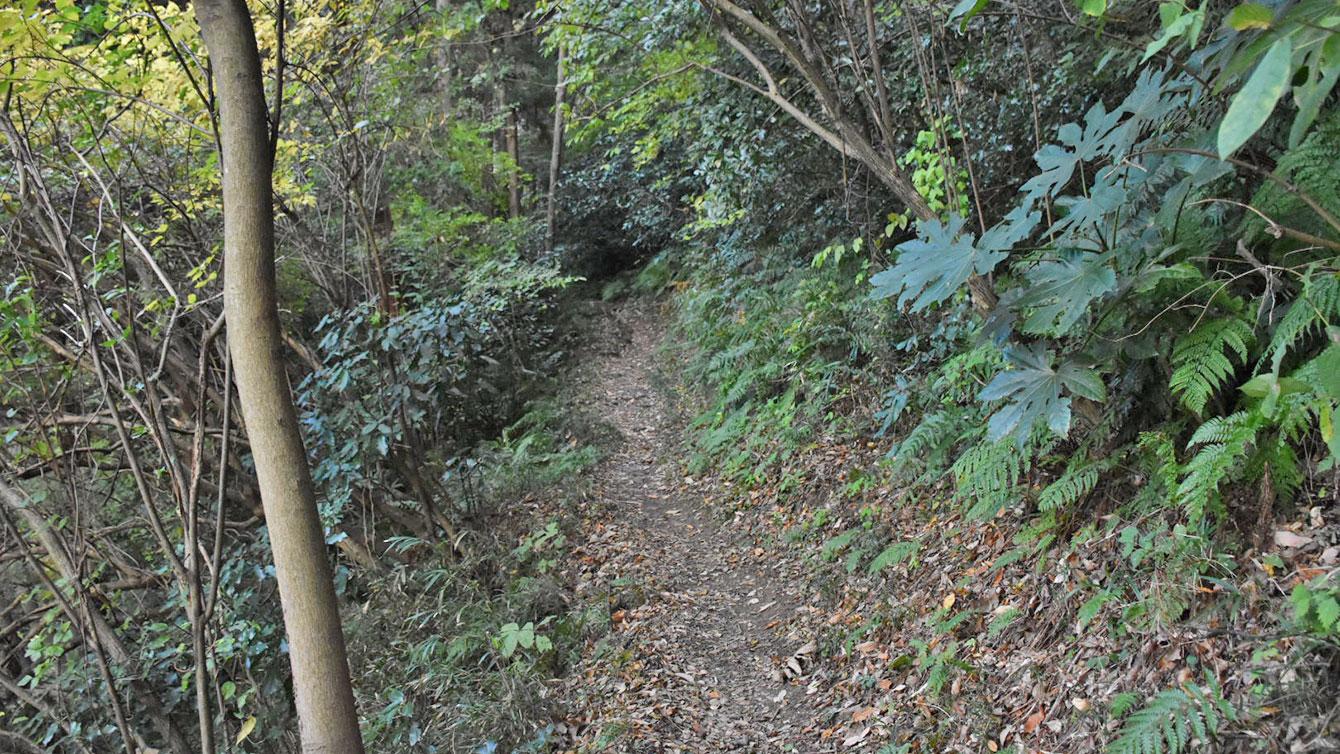 タチンダイへの山道