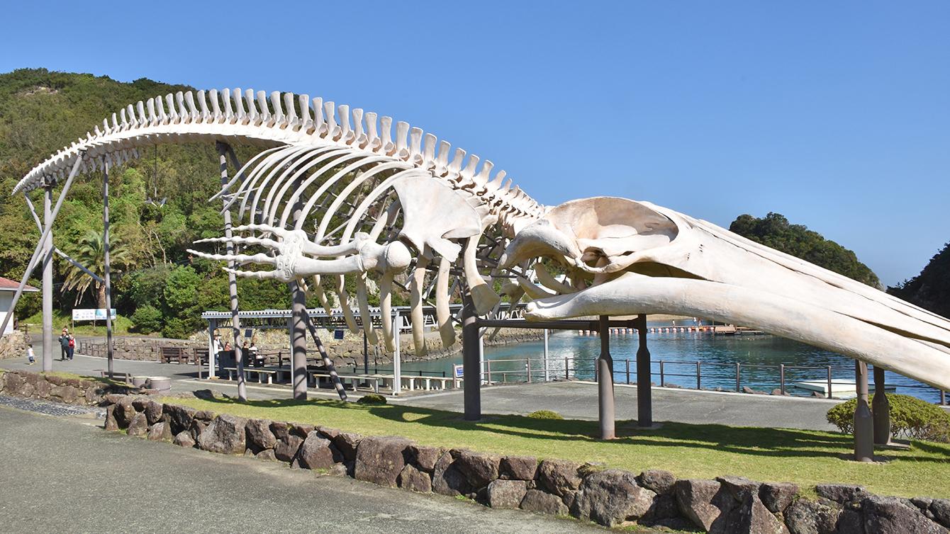 シロナガスクジラの全身骨格の複製